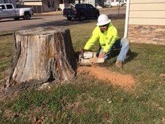 Safe Tree & Stump Removal by The Tree Specialists at Allan Tree Services