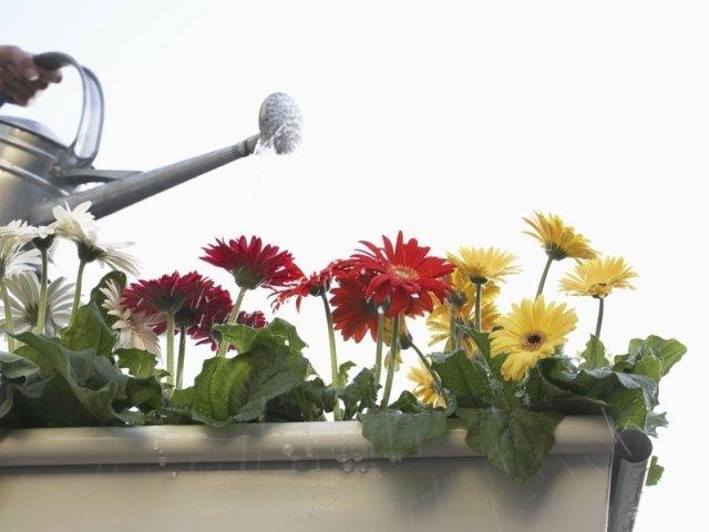 prodotti per cura giardino