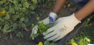 piante da orto