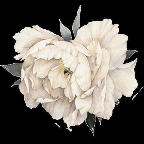 illustrazione fiori bianchi