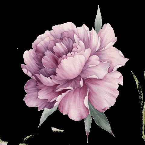 illustrazione fiore fucsia