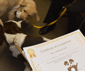 Puppies with certificate