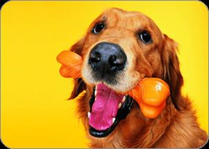 Pet Emergency Vets - Addlestone - Lynton House Veterinary Group - Dental