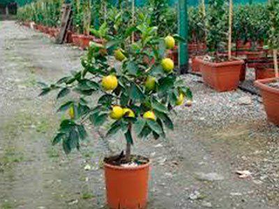 le nostre piante da fiore e da frutto