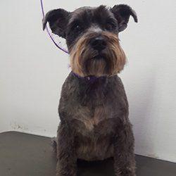 dog groomed