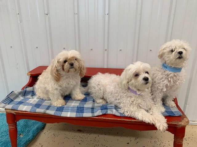 Stay and Play Pet Resort | Grand Forks, ND | Home