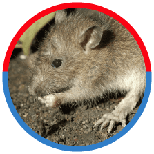 Removal of any nuisance pest