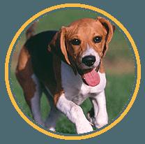 Doggy Day Care Aldershot