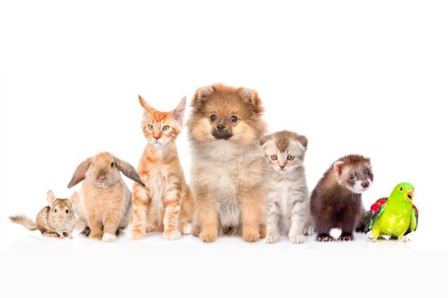 Vendita Di Cani Gatti E Uccelli Verona Blu Pet