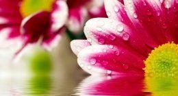 particolare dei petali di una margherita