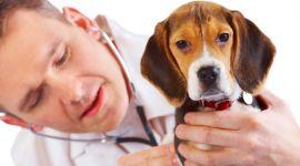 veterinario, cucciolo