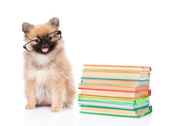 un cane con degli occhiali e accanto dei libri