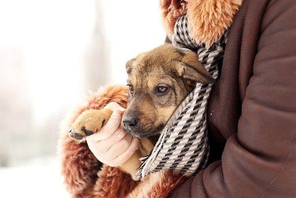 una persona con un giubbotto con in braccio un cane