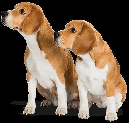 Dog Grooming Kitsap County