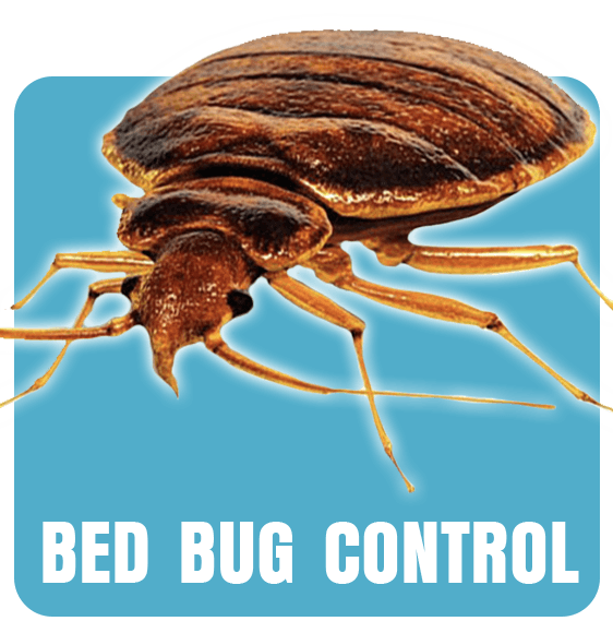Bed Bug, Bed Bug Control