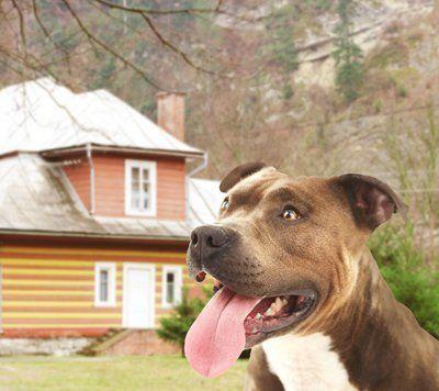 primo piano di un cane con sfondo su una casa