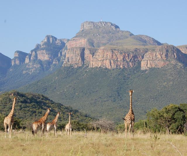 Incontri online intorno al Limpopo