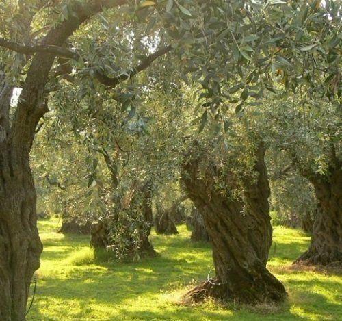 un prato e degli alberi