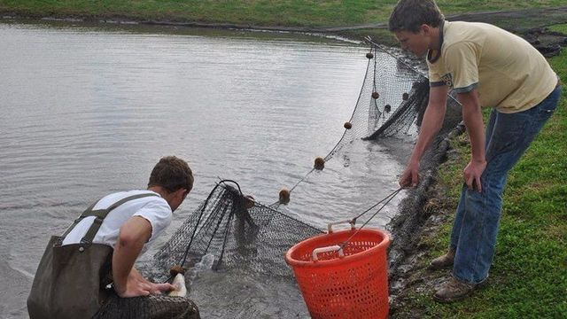 Texas fishing llc pond stocking pond renovation for Fish pond supplies near me