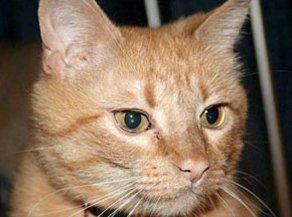 Feline senior care of pets in Anchorage, AK