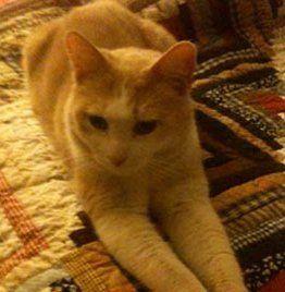 Managing senior feline conditions of pets in Anchorage, AK