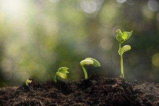 semi e granaglie