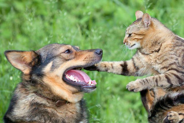 un cane ed un gatto che si guardano