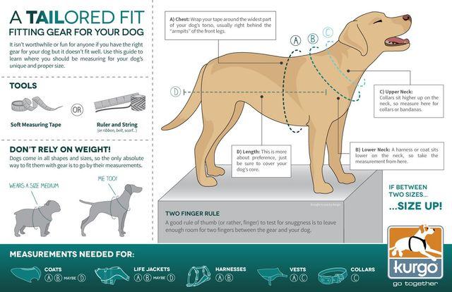 Pet Measuring Guide Concord, NH   Laconia Pet Center
