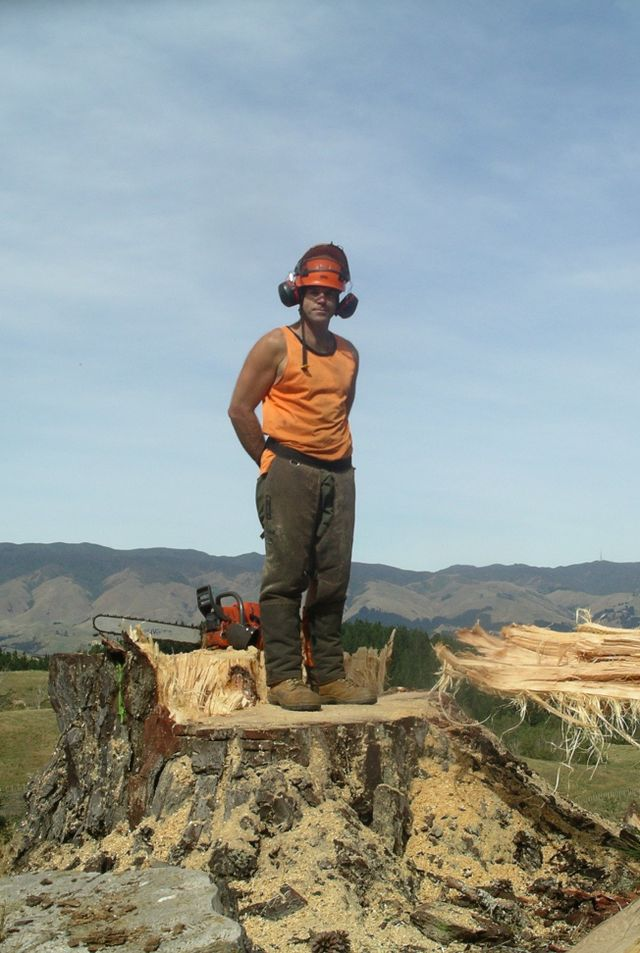 Tree care expert in Manawatu