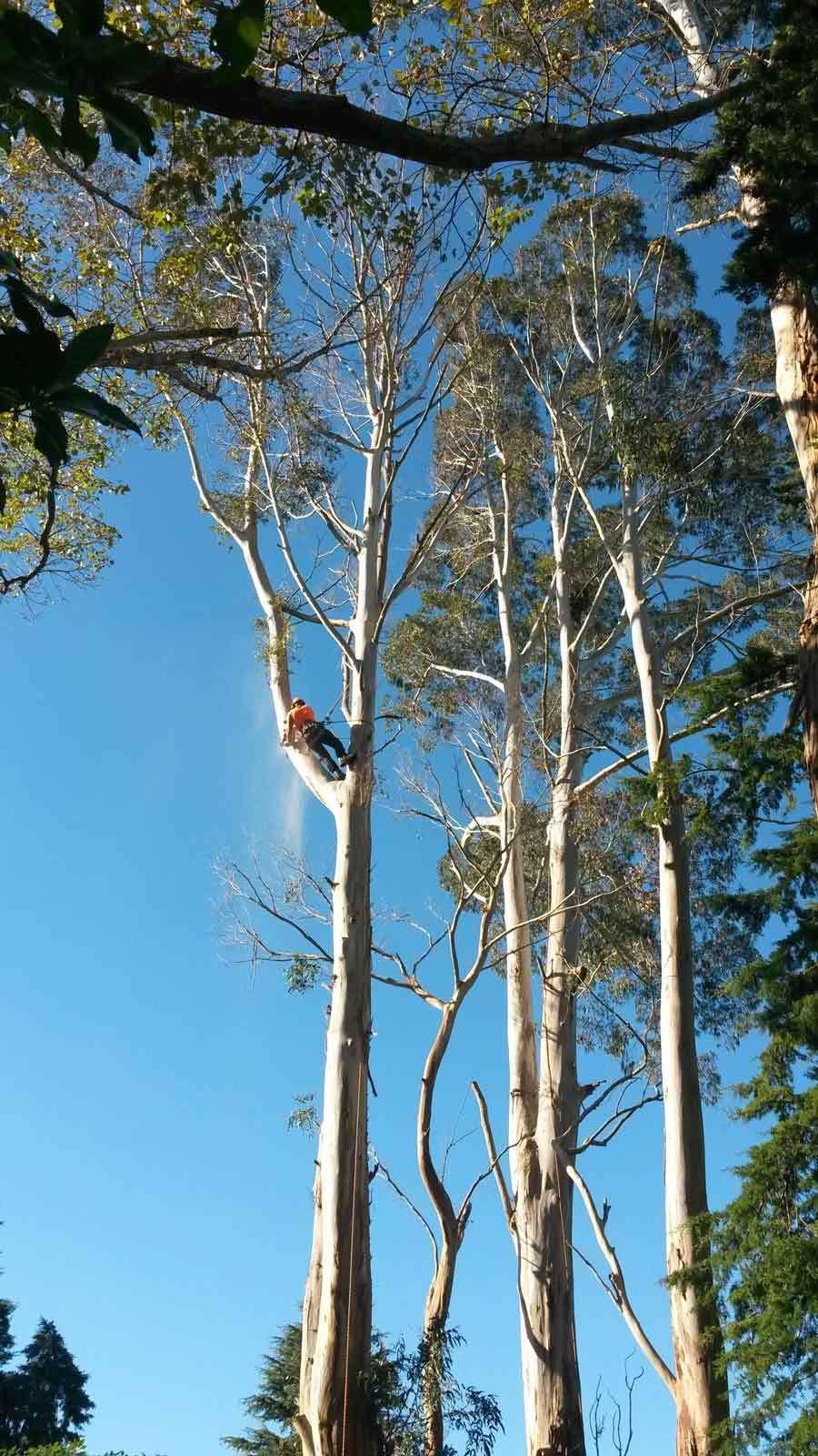 Man performing tree services in Manawatu