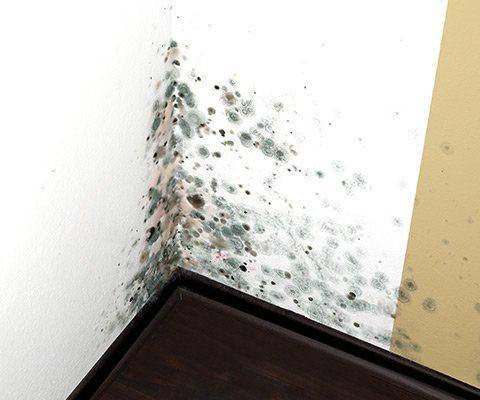 Impermeabilizzazioni muri e Deumidificazioni