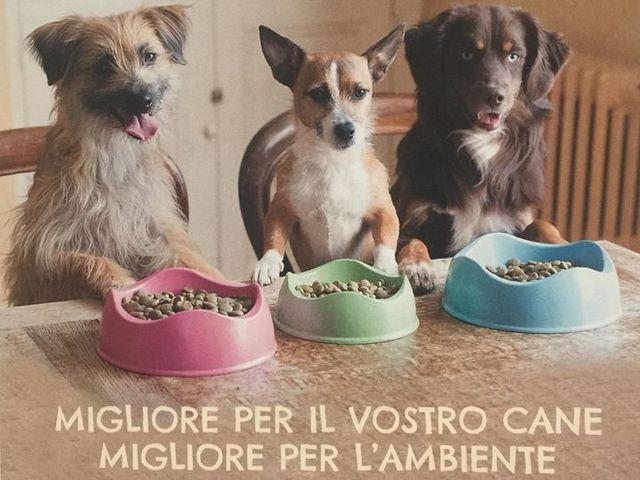 mangimi animali