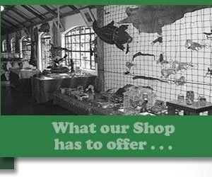 Agatha shop