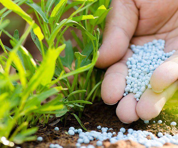 concime per piante in una mano