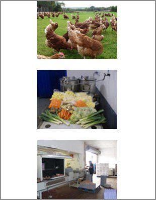 Vegetables - Canterbury, Kent - Woodlands Poultry Farm - Hen