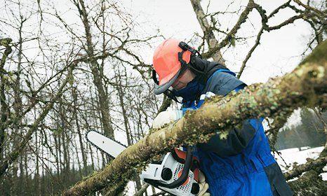 branch being cut