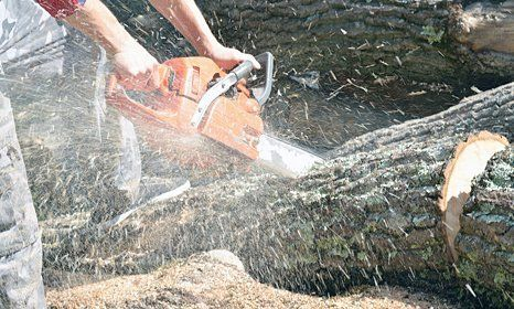 tree cutting using advanced equipment