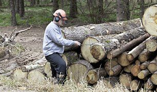log cutting