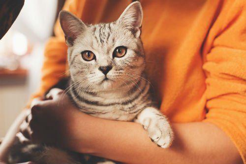 Gatto carino seduto in mani