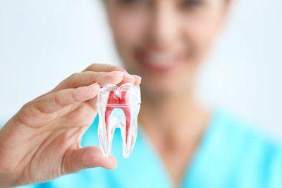 una dentista con un modello di un dente in mano
