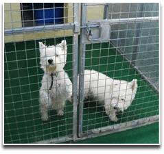 Canine kennel - Plymouth, Devon - Gentian Hill Boarding Kennels - canine
