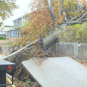 Tree Care Buffalo, NY