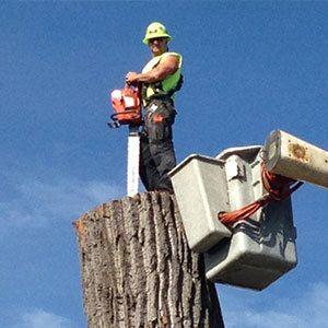 Tree Trimming Buffalo, NY