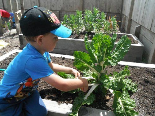 Kid learning how to take care of plants