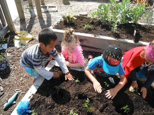 Group of kids at the preschool planting plants