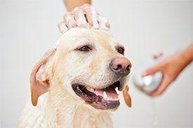 Dog Grooming Little Rock AR