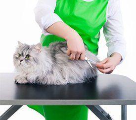 Cat Grooming Little Rock, AR