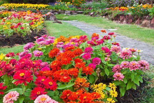 fiori e piante vicino a un sentiero