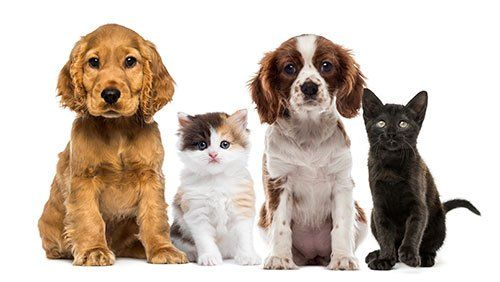 Pets and Supplies - Vancouver, WA - Alley Cat Pet Center