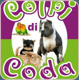 gatto sul divano - colpi di coda Reggio Calabria